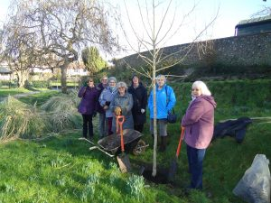 Members Planting the Centenary Tree